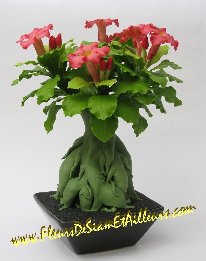 Bonsa lis des impalas fleurs de siam et d 39 ailleurs - Comment faire un bonsai ...