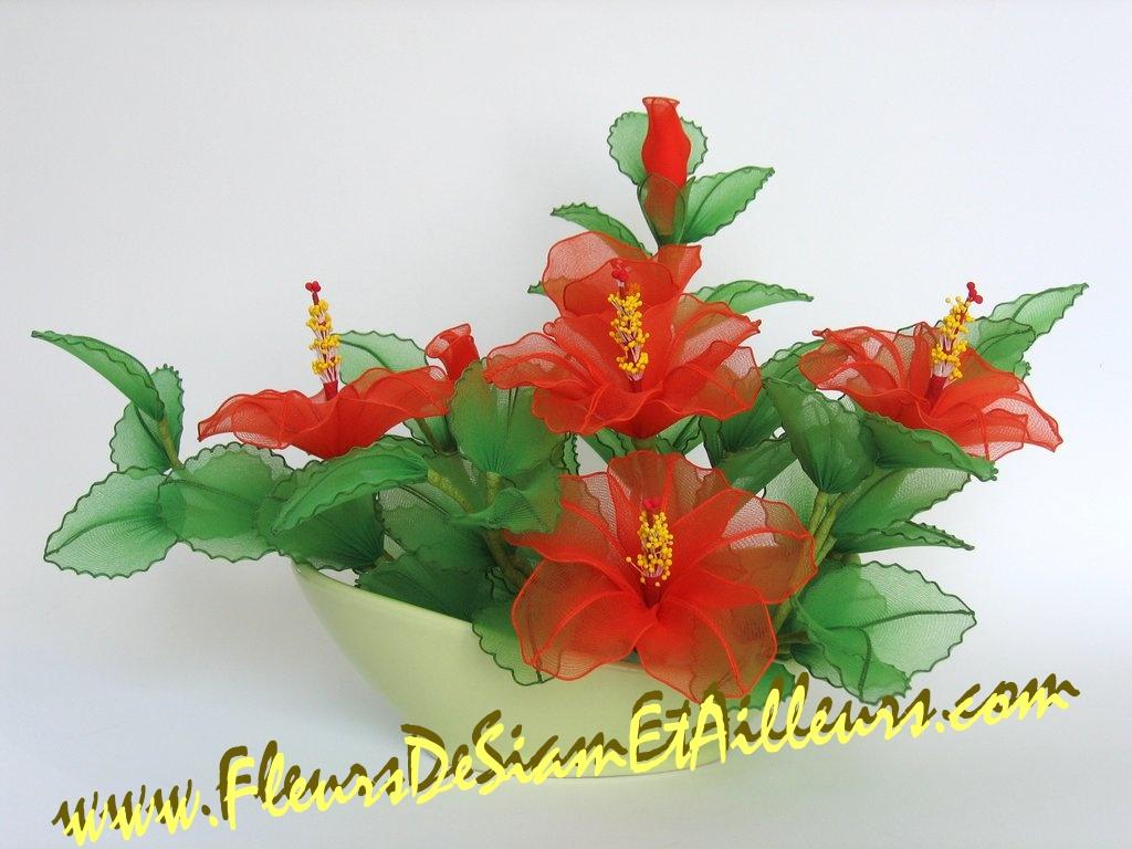 Hibiscus oranges