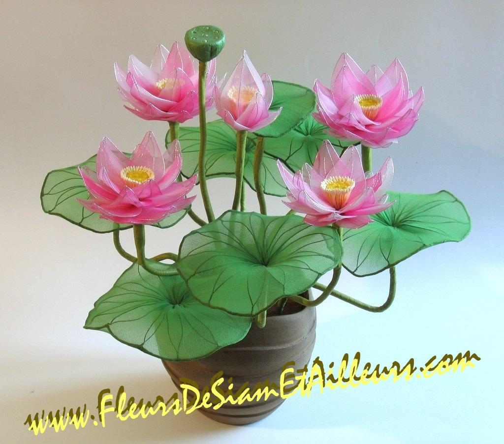 5 Lotus roses