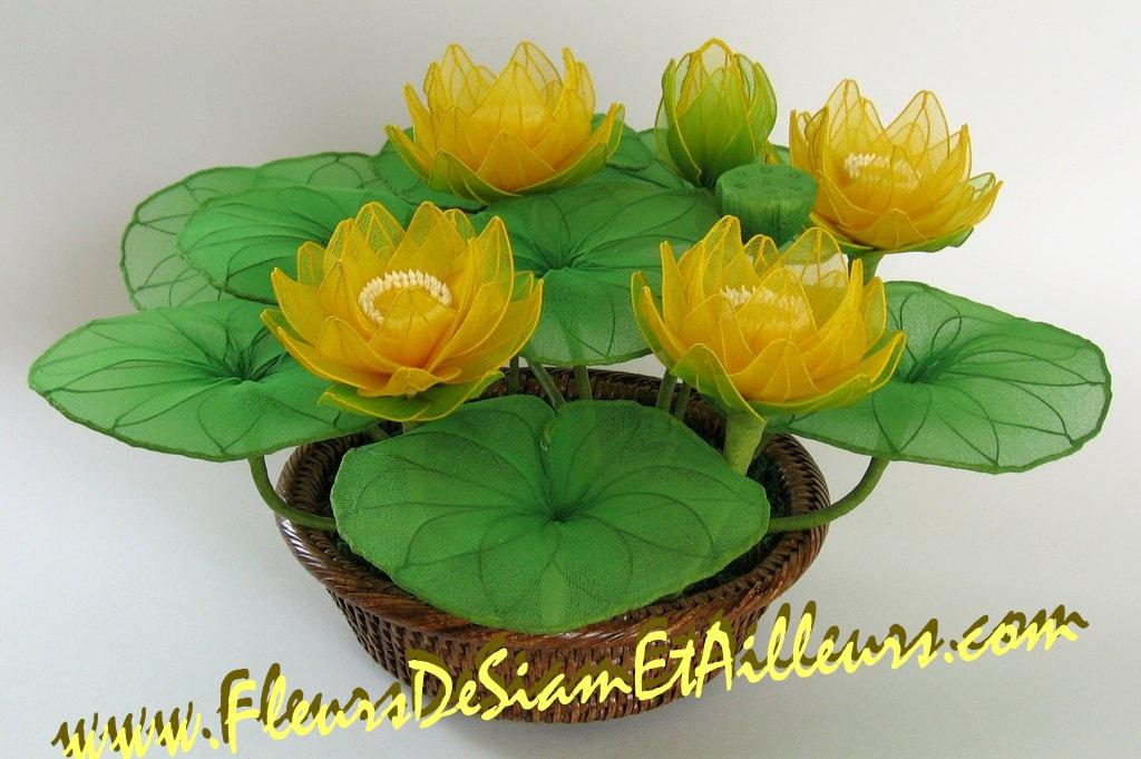 5 Lotus jaunes